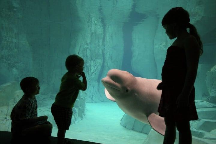 oceanografic-niños